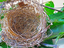 Bird nest Stock Photography