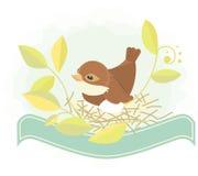 Bird in nest Stock Images