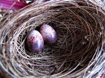 Bird nest and egg. Bird nest and raw egg Stock Image