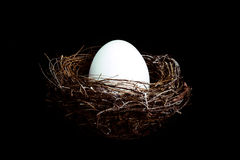 Bird nest with egg Stock Photography