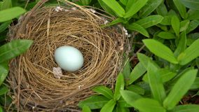 Bird nest with egg stock footage