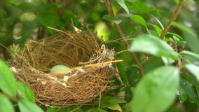 Bird nest with egg stock video