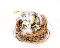 Bird nest eggs Stock Photo