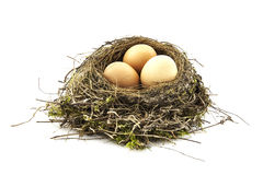 Bird nest with eggs Stock Image
