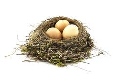 Bird nest with eggs. On white background stock image