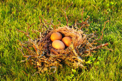 Bird nest with eggs Stock Images