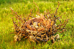 Bird nest with eggs Royalty Free Stock Photos