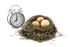 Bird nest with eggs and clock Royalty Free Stock Images