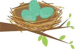Bird Nest Eggs Stock Images