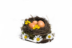 Bird nest with eggs feathers and spring flowers, isolated in wh Stock Photo