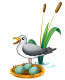 A bird beside the nest with eggs. Illustration of a bird beside the nest with eggs on a white background Stock Photo