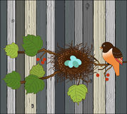 Bird with nest and eggs over wood planks background stock photo