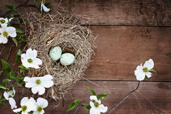 Bird Nest and Eggs with White Flowering Dogwood Blossoms. Bird nest with blue eggs over a rustic wood table top amidst flowering dogwood branches and flowers royalty free stock photography