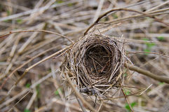 Bird nest, empty. Small brown and empty bird nest royalty free stock images