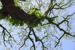 Bird of nest fern on the tree Stock Photos