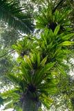 Bird nest ferns Royalty Free Stock Photo