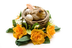 Bird in the nest and flowers Stock Images