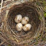 Bird nest. Stock Photos