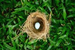 Bird nest on grass Royalty Free Stock Photos