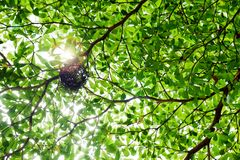 Bird nest on green tree branch with morning light Royalty Free Stock Photo