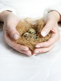Bird nest in hand Stock Photo