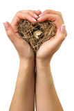 Bird nest in hands Stock Photo