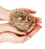 Bird nest in hands Royalty Free Stock Photography