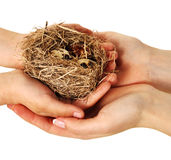 Bird nest in hands. (isolate Stock Photo