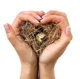 Bird nest in hands. (isolate Royalty Free Stock Image