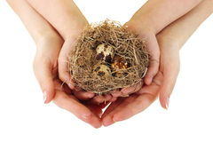 Bird nest in hands on the white background. Stock Images