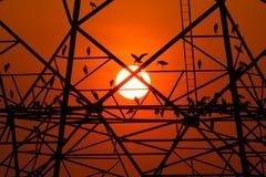 Bird nest on high voltage Stock Images