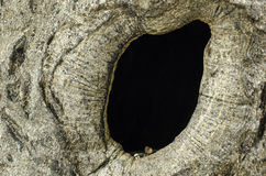 Bird nest in hollow tree trunk Royalty Free Stock Photos