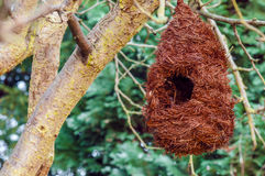 Bird nest house shelter hangging off a branch of a tree Stock Image
