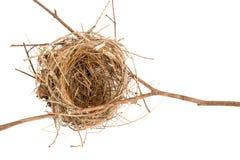 Free Bird Nest In Closeup Royalty Free Stock Photos - 111218938