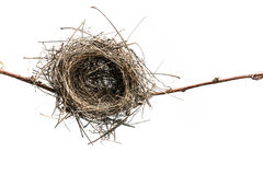 Bird Nest. Lonely bird nest on the branch, isolated on white background Stock Image