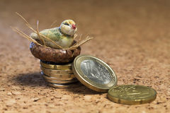 Bird nest on money Royalty Free Stock Images