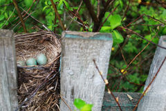 Bird nest in nature Stock Images