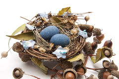 Bird nest with nest of eggs Royalty Free Stock Photos