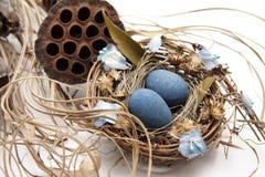 Bird nest with nest of eggs Stock Photos