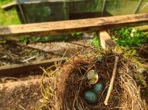 Bird Nest, Nest, Grass, Bird Royalty Free Stock Images