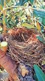 Bird nest Stock Images