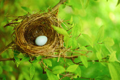 Free Bird Nest On Tree Royalty Free Stock Image - 40527596