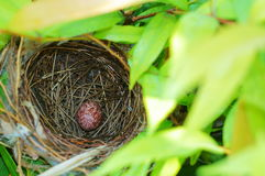 Bird Nest With one Egg. On the green tree Royalty Free Stock Images