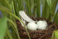 Bird Nest Outside Royalty Free Stock Photography