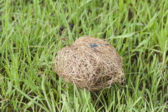 Bird nest Royalty Free Stock Image