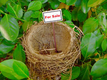 Bird nest - real estate 6 Royalty Free Stock Photo