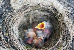 Bird-nest Stock Photos