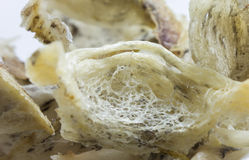 Detail of swiftlet nest Royalty Free Stock Image