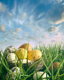 Bird nest with speckled eggs in the grass Stock Photo