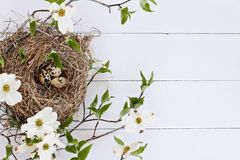 Bird Nest and Eggs with White Flowering Dogwood. Bird nest with speckled eggs over a white rustic wood table top amidst flowering dogwood branches and flowers Royalty Free Stock Photos